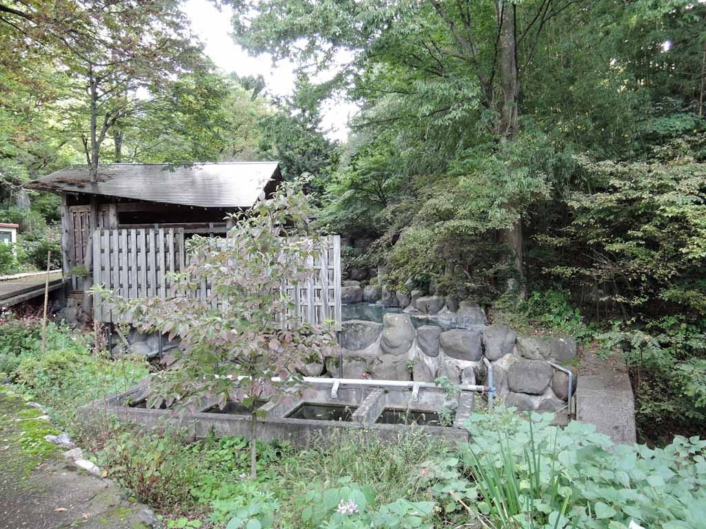 kimuraen40